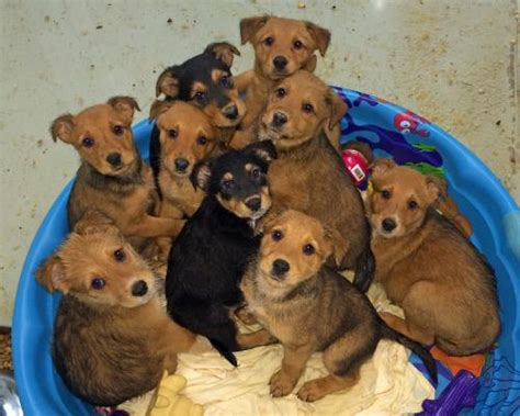 airedale golden retriever mix heads up on the m litter s web page
