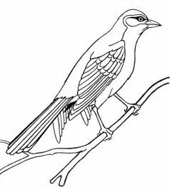 bird coloring page bird coloring pages free printable pictures