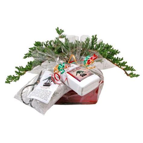 eves medium japanese juniper bonsai tree gift kit
