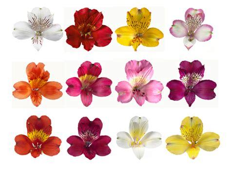 alstroemeria colors bouquet help weddingbee