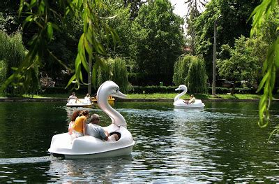 swan boats in central park urban cluj june 2009