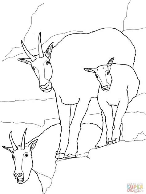 realistic goat coloring pages 17 best images about zoo activities on pinterest