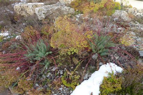 Immergr Ne Pflanzen F R Sonnige Standorte 224 by Immergr 252 Ne Pflanzen F 252 R Sonnige Standorte Immergr Ne