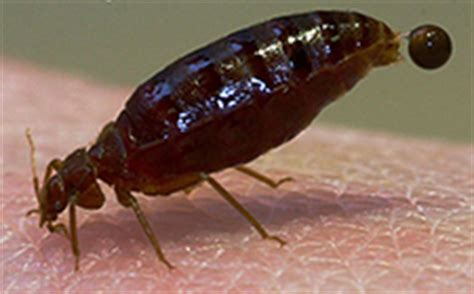 worst bed bug infestation one of the worst bed bug stories ever sterns chatter