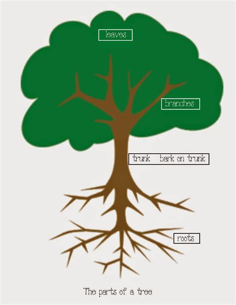make tree diagram create your own tree diagram chocolate tree diagram