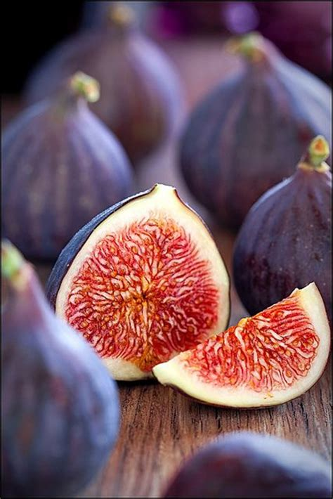 why is my fig tree not producing fruit get 20 fig fruit ideas on without signing up