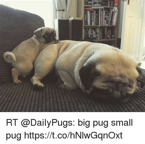 big pug rt big pug small pug httpstcohnlwgqnoxt pug meme on sizzle