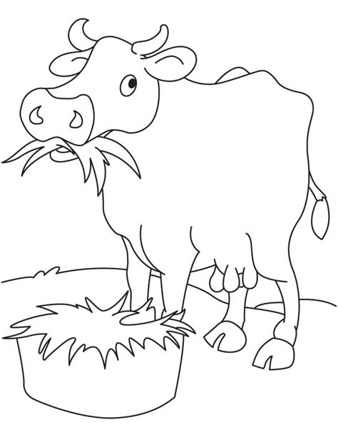 jersey cow coloring page jersey cow sketch drawing sketch coloring page