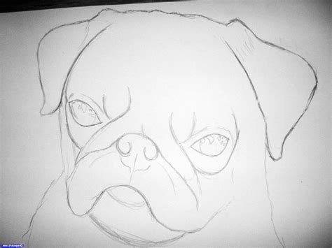 how to draw a realistic pug easy to draw realistic animals step by step drawing of sketch