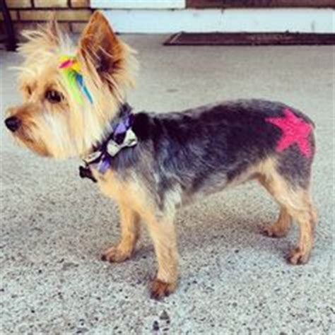 petsmart grooming prices yorkie get a new school year look with petexpressions colors at petsmart ig photo credit
