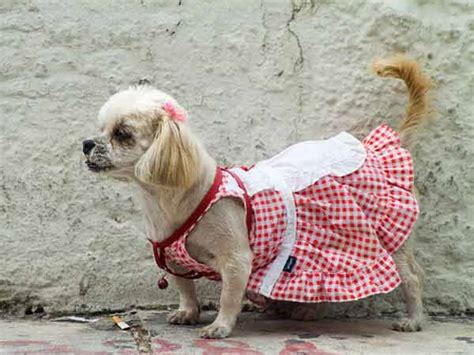 clothes for dogs clothes ideas outdoor wear coats vests and booties for dogs