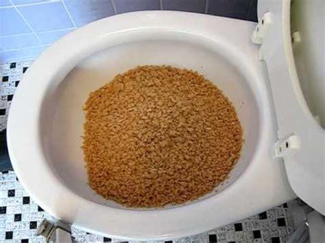 Gallery of toilet of venus