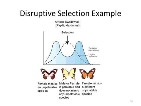 population evolution biology chapter ppt video online download