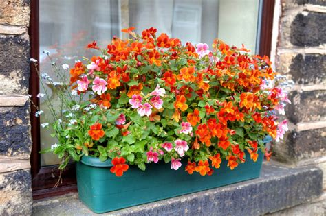 plastic window flower boxes 40 window and balcony flower box ideas photos