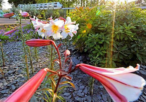 Garten Kaufen In Hamburg Wilhelmsburg by Igs Hamburg 550 000 Besucher Gartentechnik De