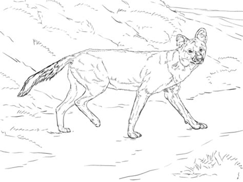 dhole coloring page free printable coloring pages