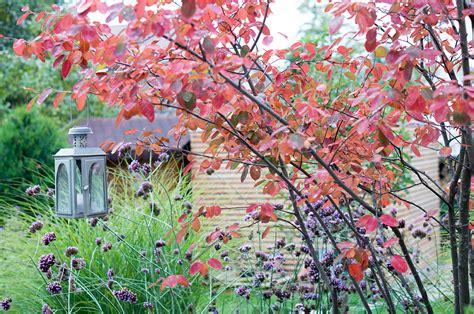 Herbstlaub Garten by Herbstlaub Im Garten Lilli Straub Den Traumgarten Planen