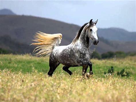 imagenes animales bellos uno de los animales m 225 s bellos el caballo youtube