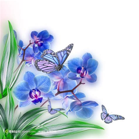 orchid blue water reflection flowers beautiful orchid 兰花背景图案 素材公社 tooopen
