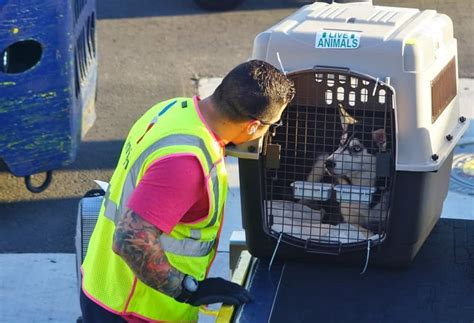 united airlines suspends pet transport service after series of mishaps the dogington post