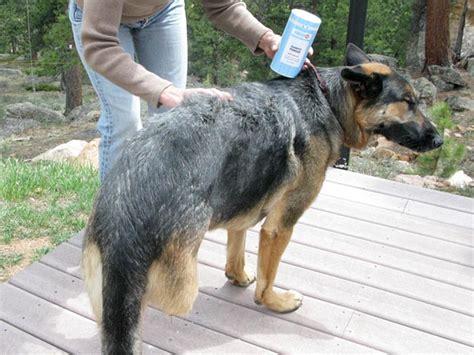 dryer for dogs diy shoo for dogs 101 breeds