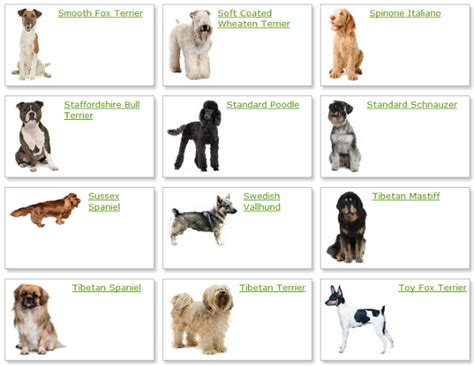 breeds list list of breeds photograph all list of different dogs breed