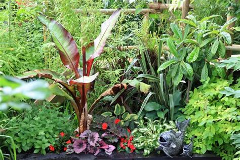 tropical plants for the garden hardy plants to grow in the uk nick wilson s garden