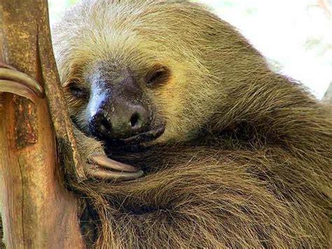 imagenes animales durmiendo el top 10 de los animales durmiendo animalesmascotas