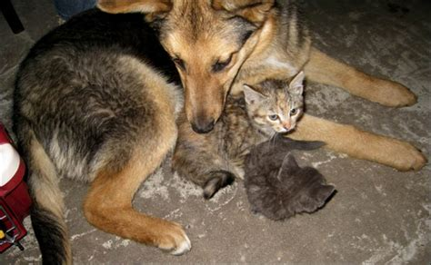 stray meaning stray gets reward for being foster to seven kittens