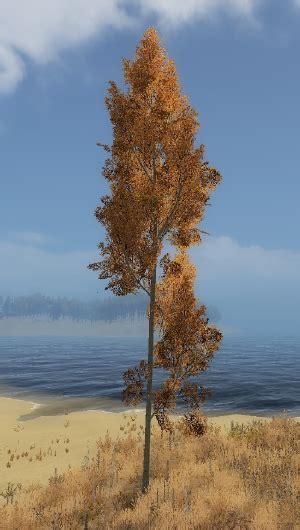 weight 65 kensington fir tree aspen tree official is feudal wiki