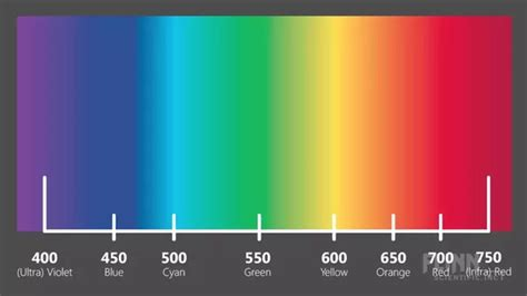 which color has the wavelength which colour has the maximum wavelength quora