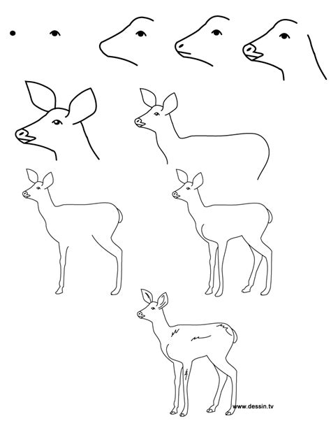 how to draw animals easy animals to draw step by step memes