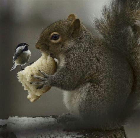 squirrel and bird eating bread yum pinterest