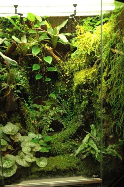 Lu Akuarium Diy 1000 images about just beautiful paludarium aquarium on