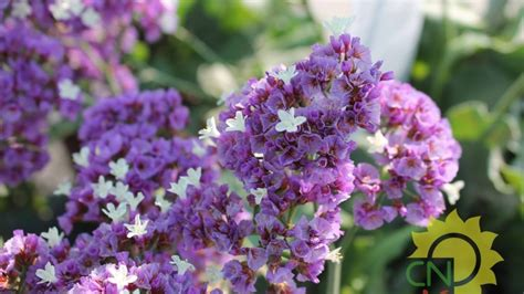 piante da fiore estive piante estive casanatura vivaio