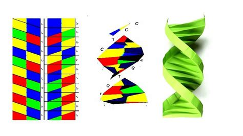 Dna Model Template by Origami Dna Template 28 Images Origami Dna Model