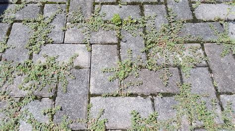 Patio Pavers Without Digging How To Get Rid Of Patio Weeds Without Chemicals