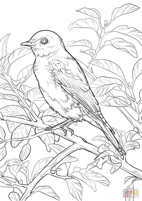 86 coloring pages blue bird eastern bluebird