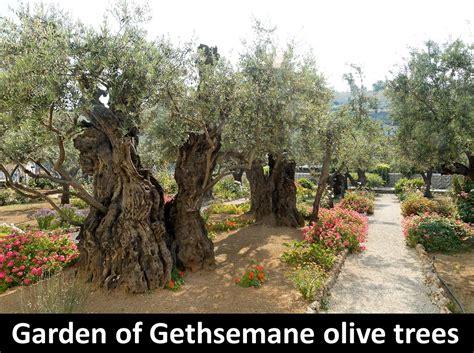 Garden Of Today Living The Biblios Garden Of Gethsemane Devotional