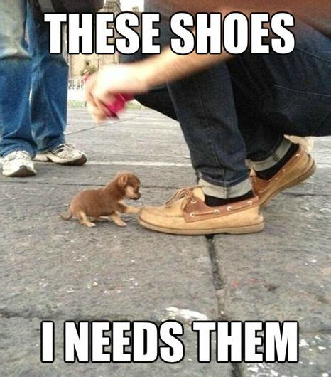 Bad Fashion Meme - very funny animals memes steemit