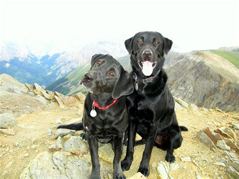 best hiking breeds 15 best breeds for hiking buddies page 6 of 16 outwardon