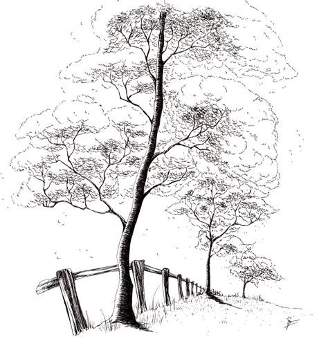 A Sketches Of Trees by 3 Tree Sketch