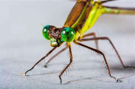 Seribu Sayap kostenloses foto libelle insekt nahaufnahme auge