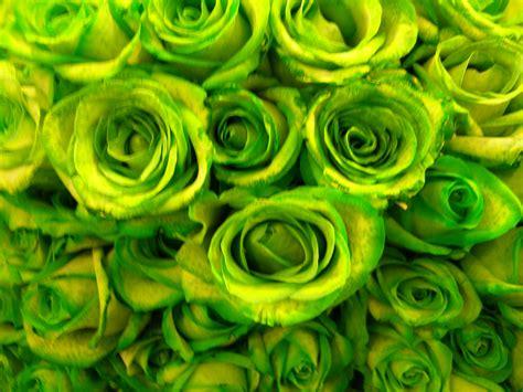 imagenes de flores verdes rosas verdes blog da floresnaweb entregas em todo o