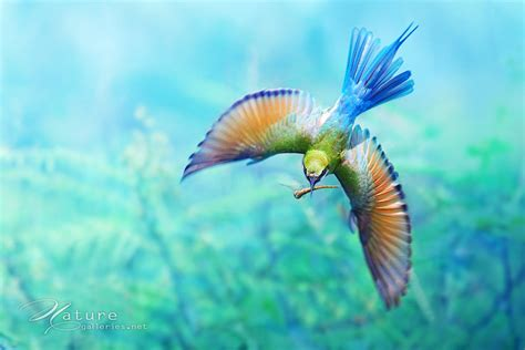 colorful bird pictures colorful bird pictures bird wallpaper animal photo