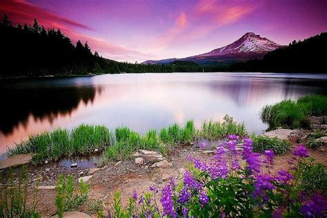 wallpaper free free 3d nature wallpaper for your pc