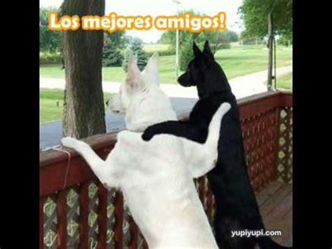 imagenes mas graciosas del mundo los perros mas graciosos del mundo youtube