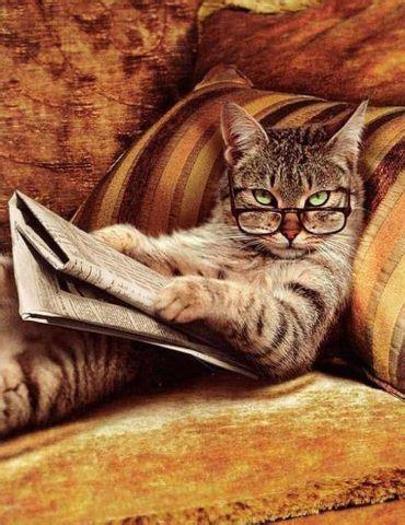 libro un gato a cat fotos de gatos leyendo estandarte