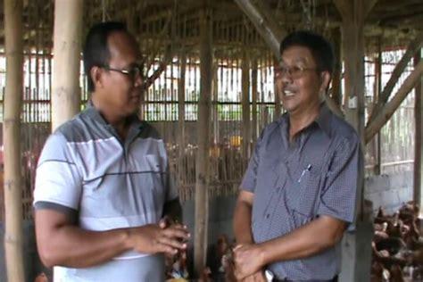 Afkir Malang kisah sukses peternak ayam pullet dari malang ardhi