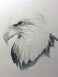 bald eagle sketch by drmustard on deviantart